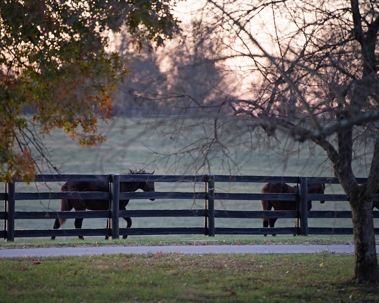 Next year's crop of yearlings (currently weanlings) at<br /> Pin Oak Stud<br /> at  Nov. 8, 2019 Pin Oak Stud in Versailles, KY.