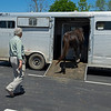Caption: Rusty Ford follows mare out from shed as Mike Lake Sr. loads her onto van after breeding<br /> Rusty Ford at WinStar near Versailles, Ky., on May 1, 2020 WinStar in Versailles, KY.