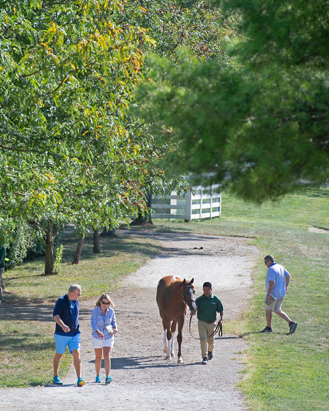 Posts leading to the sales pavilion<br /> at the Keeneland September Sale.