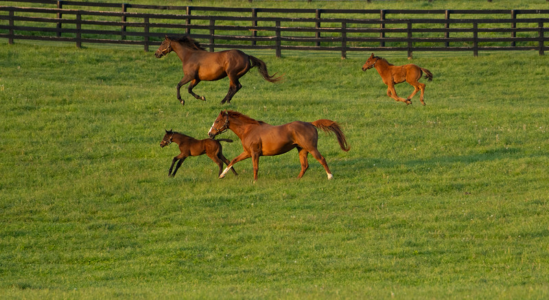 Caption: mares and foals at Ashview, top mare and foal are Natural Rush and 2020 Justify filly;  Bottom mare and foal are Bruised Orange and 2020 Cairo Prince filly<br /> Mares, foals, yearlings, scenes at Ashview Farm near Versailles, Ky., on April 28, 2020 Ashview Farm in Versailles, KY.