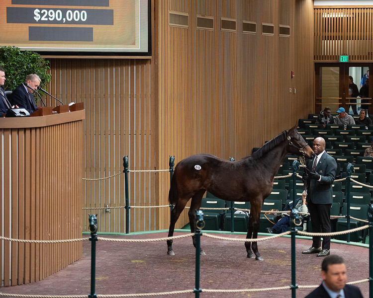 Hip 69 yearling by Gun Runner from Sunday Sonnet at Denali and purchased by Nick DeMeric Jan. 13, 2020 Keeneland in Lexington, KY.
