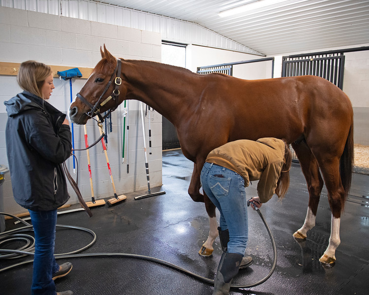 Getting hooves hosed off before going in. the aqua equine treadmill. Code of Honor at Margaux Farm for some down time before returning to Shug McGaughey and his 4-year-old campaign on<br /> Jan. 23, 2020 Margaux Farm in Midway, KY.