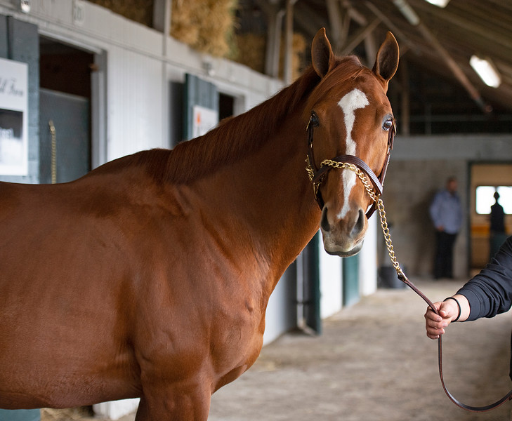Hip 795E, Inflamed. Scenes during the Keeneland January sales on Jan. 11, 2020 Keeneland in Lexington, KY.