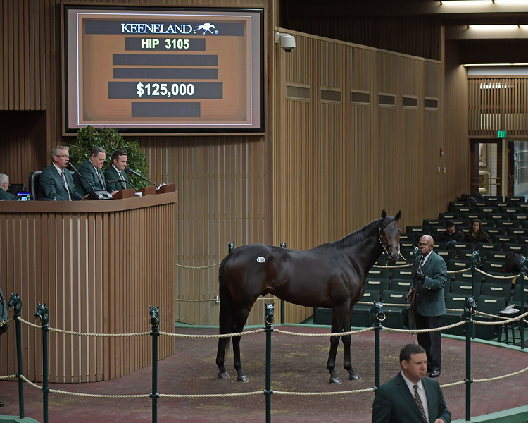 HIp 3105 Ring of Fire<br /> on  Nov. 13, 2019 Keeneland in Lexington, KY.