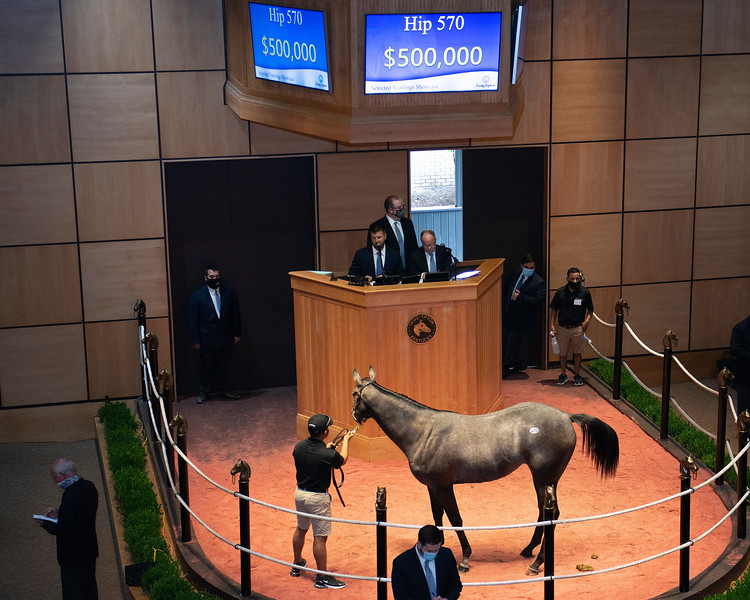 Hip 570 filly by Gun Runner out of Divine Dawn from Gainesway<br /> Fasig-Tipton Selected Yearlings Showcase in Lexington, KY on September 10, 2020.