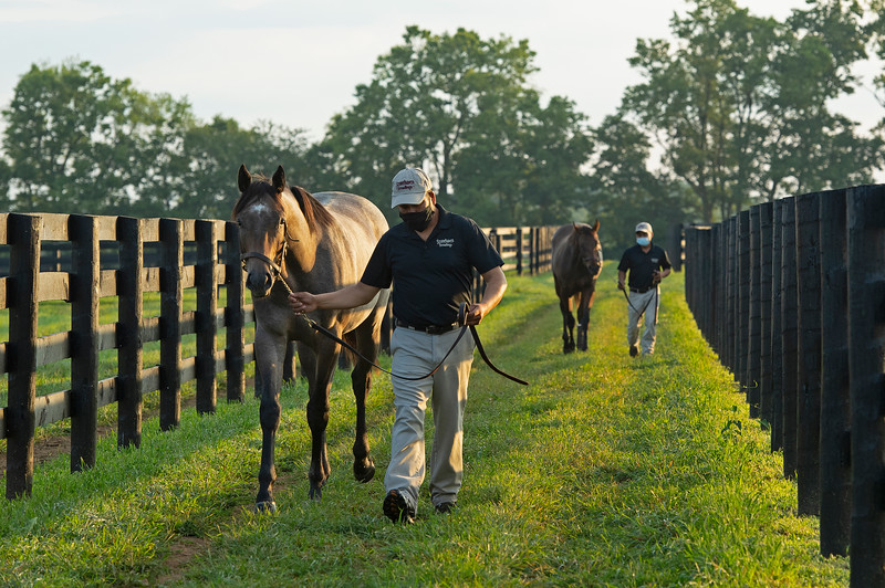 Caption: (L-R): Jose Varela with Frosted colt out of Lucy in Diamonds and  Distorted Humor colt out of Santa Vindi with Justo Martinez<br /> Aidan and Leah O'Meara at Stonehaven Steadings near Versailles, Ky. on Aug. 7, 2020