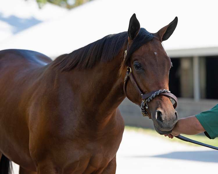 The Quality Road colt consigned as Hip 436 at Legacy Bloodstock's consignment to the Keeneland September Sale