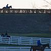 Caption: horses training from the Rice Road barn area.<br /> Behind the Scenes at Keeneland during Covid19 virus and the people, horses, and essentials needed to take care of race horses on April 2, 2020 Keeneland in Lexington, KY.