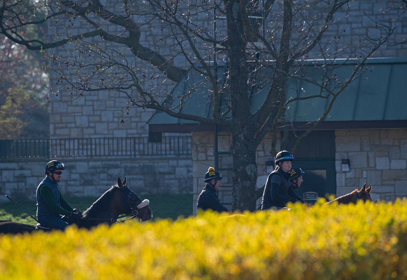 Caption: horses at gap going on to track<br /> Behind the Scenes at Keeneland during Covid19 virus and the people, horses, and essentials needed to take care of race horses on April 2, 2020 Keeneland in Lexington, KY.