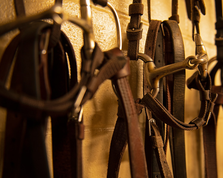Caption: bits and bridles<br /> A native of Oklahoma, Heath started working at WinStar Farm on October 10, 2014, and became the farm trainer in October of 2018. Presently he has about 100 horses in training at the WinStar Farm training center, where they have a 7 1/2-furlong main track and 3/4 of a mile undulating turf gallop.<br /> Daily Life series on Destin Heath, farm trainer at WinStar Farm on Aug. 11, 2020 WinStar Farm in Versailles, KY.