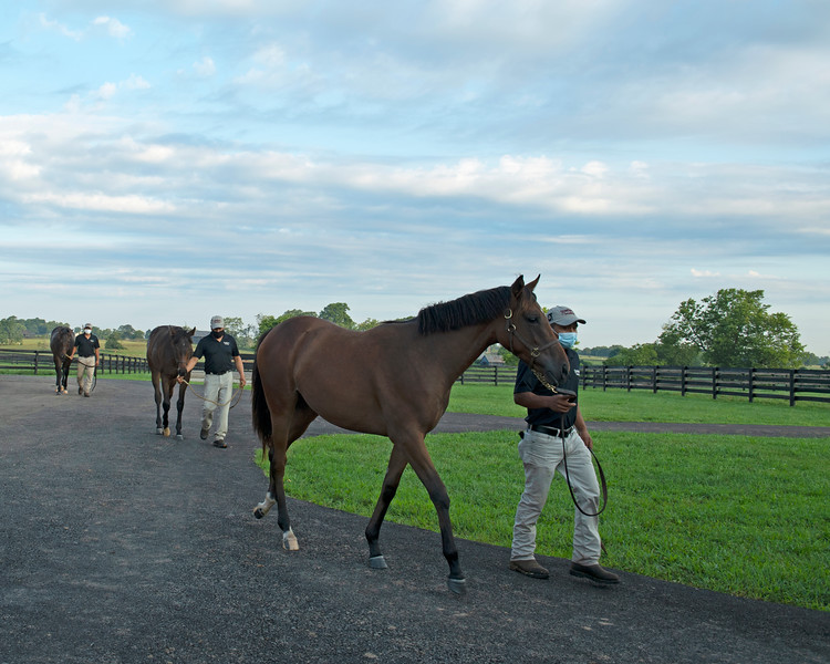 Caption:  front to back, fillies, are: Paynter out of Double Flyright with Justo Martinez, Klimt out of I Have a Price with Jose Varela, and Overanalyse out of Can You Talk with Obner Martinez<br /> Aidan and Leah O'Meara at Stonehaven Steadings near Versailles, Ky. on Aug. 7, 2020