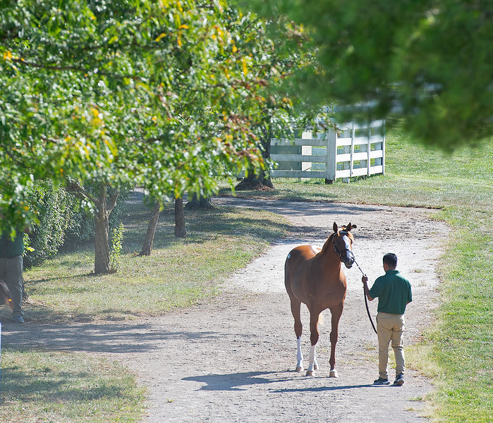 Lane's End yearling scene<br /> at the Keeneland September Sale.