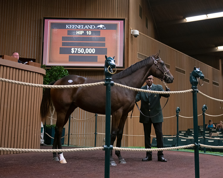 The Curlin filly consigned as Hip 10 in the ring at the Keeneland September Sale