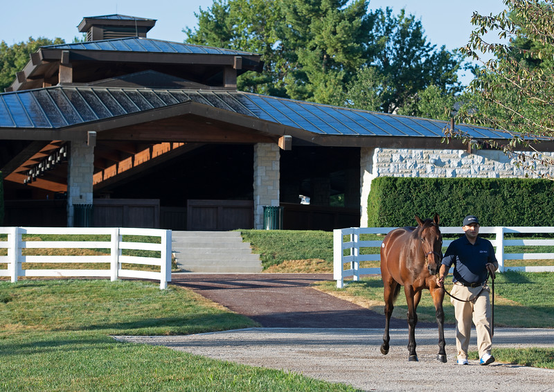 Hip 534 walking at Mill Ridge consignment and in front of recent renovations<br /> at the Keeneland September Sale.