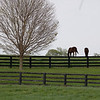 Caption: mares<br /> Mill Ridge Farm scenes, near Lexington, Ky.,  on April 15, 2020 Mill Ridge in Lexington, KY.