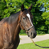 Caption: <br /> Diva Delite, dam of Midnight Bisou, at Hunter Valley Farm on July 8, 2020 Hunter Valley Farm in Versailles, KY.