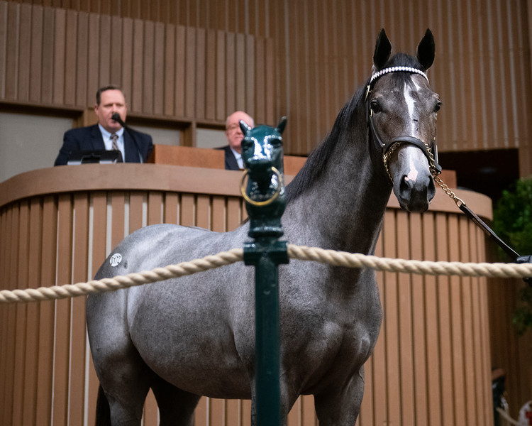 The Tapit colt consigned as Hip 172 in the ring at the Keeneland September Sale