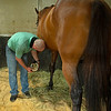 Caption: Heath goes in stall with Motown Music, checking his loose shoe. Heath gets his farrier gear and returns to stall to take off the shoe, which has built up glue and has become loose. Farrier will replace the next day. <br /> A native of Oklahoma, Heath started working at WinStar Farm on October 10, 2014, and became the farm trainer in October of 2018. Presently he has about 100 horses in training at the WinStar Farm training center, where they have a 7 1/2-furlong main track and 3/4 of a mile undulating turf gallop.<br /> Daily Life series on Destin Heath, farm trainer at WinStar Farm on Aug. 11, 2020 WinStar Farm in Versailles, KY.