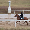 Horse training at Blackwood. Scenes at Blackwood Stables on<br /> Feb. 25, 2020 Blackwood Stables in Versailles, KY.