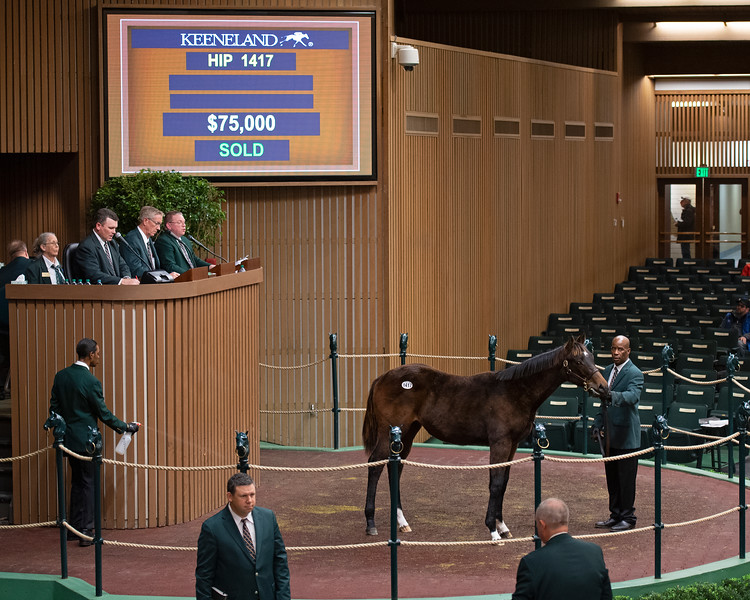 Hip 1417 colt by Exaggerator from Frolic's Revenge and Woodford Thoroughbreds<br /> Keeneland January Horses of all ages sales on<br /> Jan. 16, 2020 Keeneland in Lexington, KY.