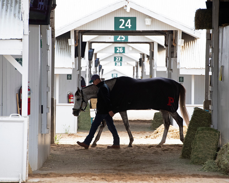 walking shedrow<br /> Keeneland morning scenes at Keeneland<br />  on April 11, 2019 in Lexington, Ky.