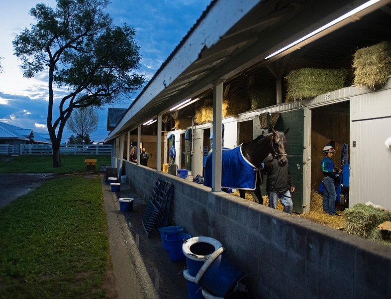 Caption: walking the shedrow after her bath<br /> Midnight Bisou at Keeneland on May 2, 2020 Keeneland in Lexington, KY.