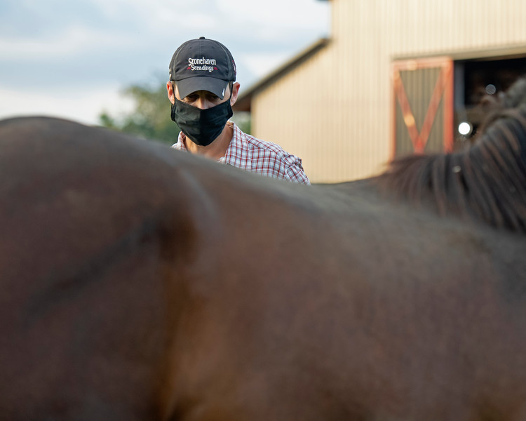 Caption:  Aidan O'Meara looks over each yearling as they come up from paddocks about 7:30 am. <br /> Aidan and Leah O'Meara at Stonehaven Steadings near Versailles, Ky. on Aug. 7, 2020