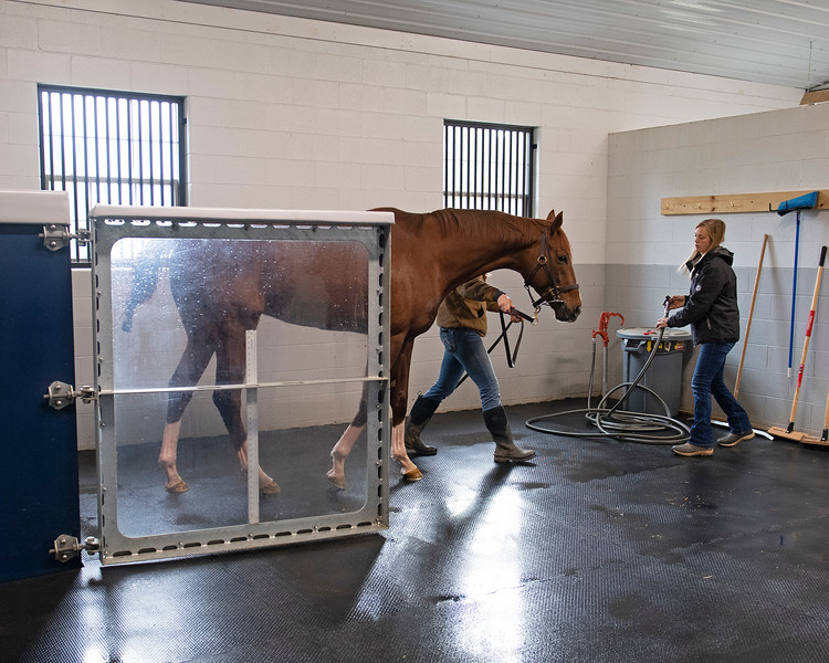 Water emptied. out at end of 15-minute aqua equine treadmill session and he walked out the front. Code of Honor at Margaux Farm for some down time before returning to Shug McGaughey and his 4-year-old campaign on<br /> Jan. 23, 2020 Margaux Farm in Midway, KY.