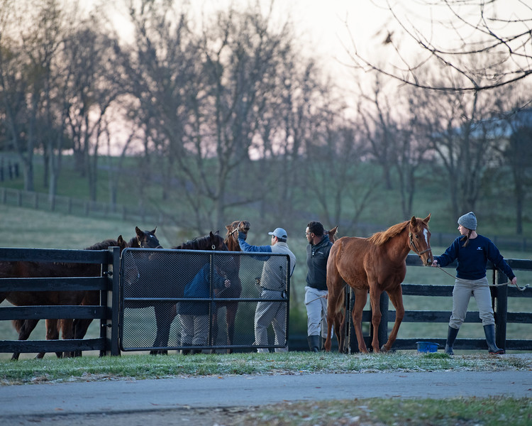 Weanling on right, chestnut, is half to Perfect Alibi (Flatter filly from No Use Denying). Next year's crop of yearlings (currently weanlings) at<br /> Pin Oak Stud<br /> at  Nov. 8, 2019 Pin Oak Stud in Versailles, KY.