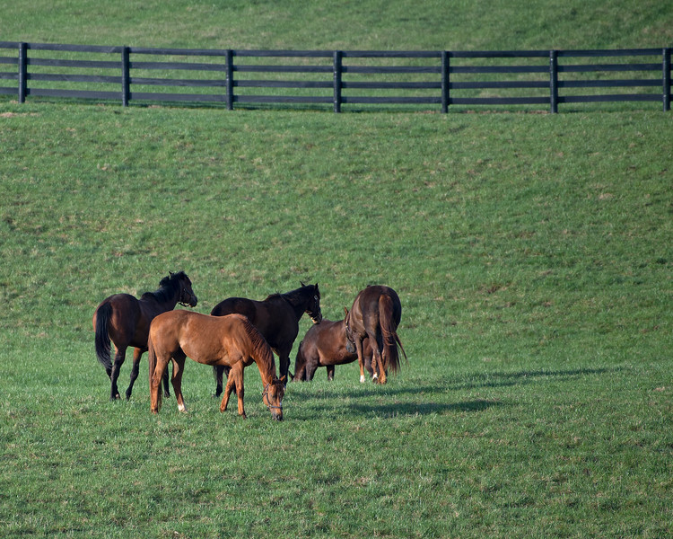 Broodmares at WinStar on<br /> March 26, 2020  in Versailles, KY.
