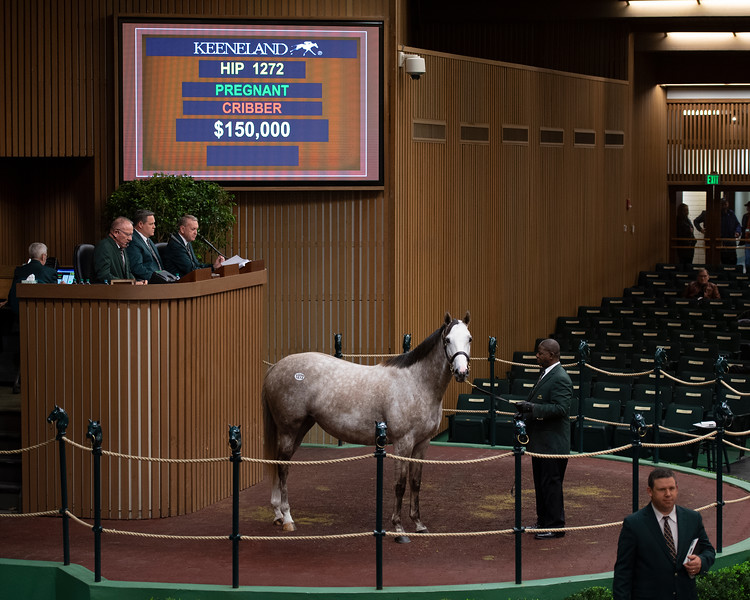 Hip 1272 Tip Top Tap from Gainesway<br /> Keeneland January Horses of all ages sales on<br /> Jan. 16, 2020 Keeneland in Lexington, KY.