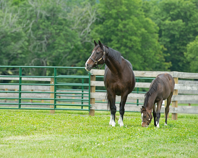 Caption: with her 2020 Tapit filly<br /> Hollywood Story at Starwood Farm near Versailles, Ky., on June 30, 2020 Starwood Farm in Versailles, KY.