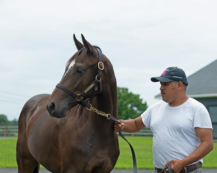 Caption: 2019 yearling filly by Curlin being walked by Sergio Munoz<br /> Hollywood Story at Starwood Farm near Versailles, Ky., on June 30, 2020 Starwood Farm in Versailles, KY.
