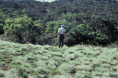 Greensword Bog three years after fencing; standing: (unknown); 1983; (photo developed December 1983); (photoID: bhg002030)
