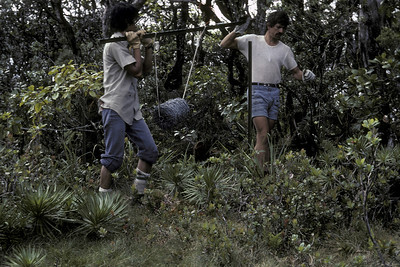 Art Medeiros and Joel Lau laying out barbed wire, HSTP: Greensword Bog; 23&ngsp;June1981; photo by BetsyH. Gagné (photoID: bhg002026)