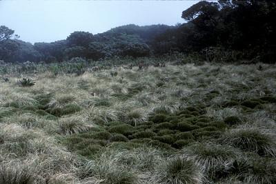 Greensword Bog, 5th anniversary(?); photo developed December1986; photo by (unknown);(photoID:bhg002036)