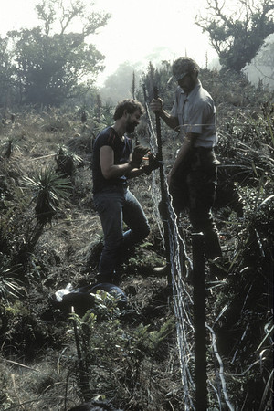 New Bog fencing; Art Medeiros and Terry Lind; December 1983; photo by Betsy H. Gagné (photoID: bhg002052)