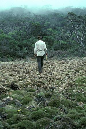"Oreobolus furcatus (Cyperaceae) in ""Greensword Meadow,"" Hana Forest Reserve, East Maui; extensive pig damage; 21March1981; walking: BetsyH. Gagné.  photo by P. van Royen (photoID: bhg002021 & bhg002058)"
