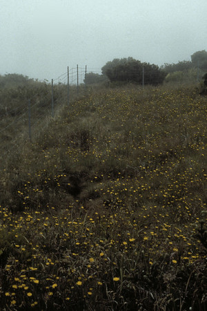 Haleakala National Park fence: pig damage on outside, regrowth on HALE side; July 1989; photo by Betsy H. Gagné (photoID: bhg002050)