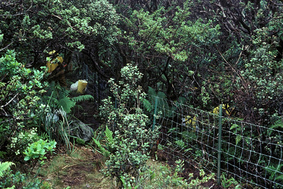 Greensword Bog: portion of fence within forest--camp area; 25 June 1981 (photoID: bhg002028)