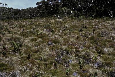 Greensword Bog; photo developed July1973 (photoID:bhg002008)