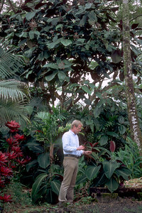 In 1988, on returning from Tahiti to Maui, Betsy Gagné discovered this plant growing along the Hana Highway at Alii Gardens (here with Dr. Lloyd Loope underneath the 10-year-old tree with a carpet of seedlings).  (photoID: bhg000320)