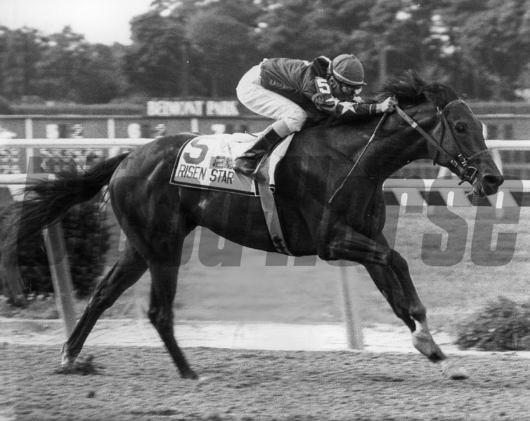 Risen Star triumphs in the 1988 Belmont Stakes<br /> Photo by: Bob Coglianese