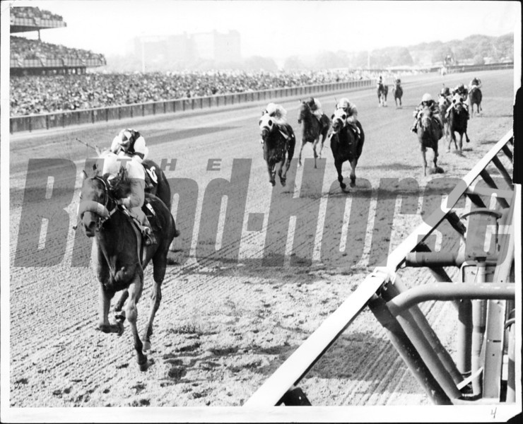 Amberoid won the Belmont Stakes at Belmont in 1966 with William Boland up. <br /> Photo by Bob Coglianese.