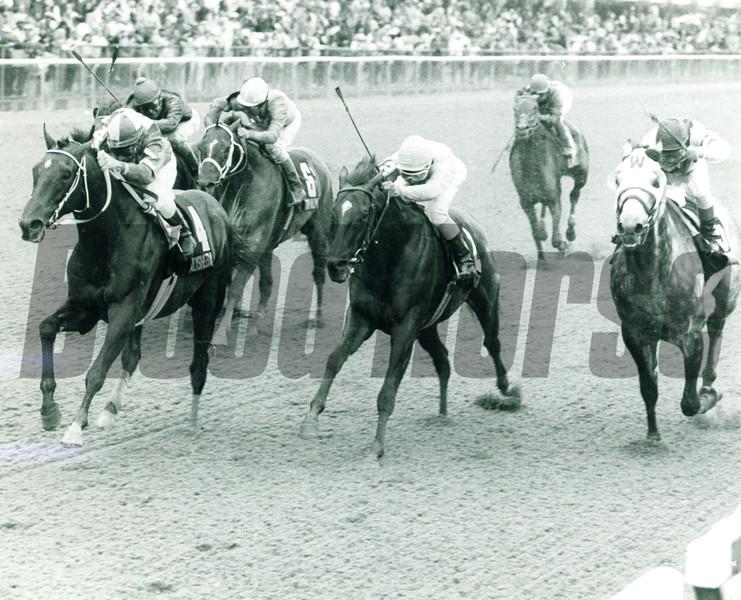 Batch 23: HORSES