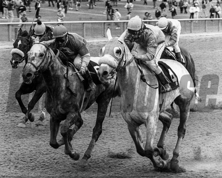 Tinchen's Prince wins the Ashley T. Cole Handicap at Aqueduct on October 19, 1988.<br /> Photo by: Bob Coglianese