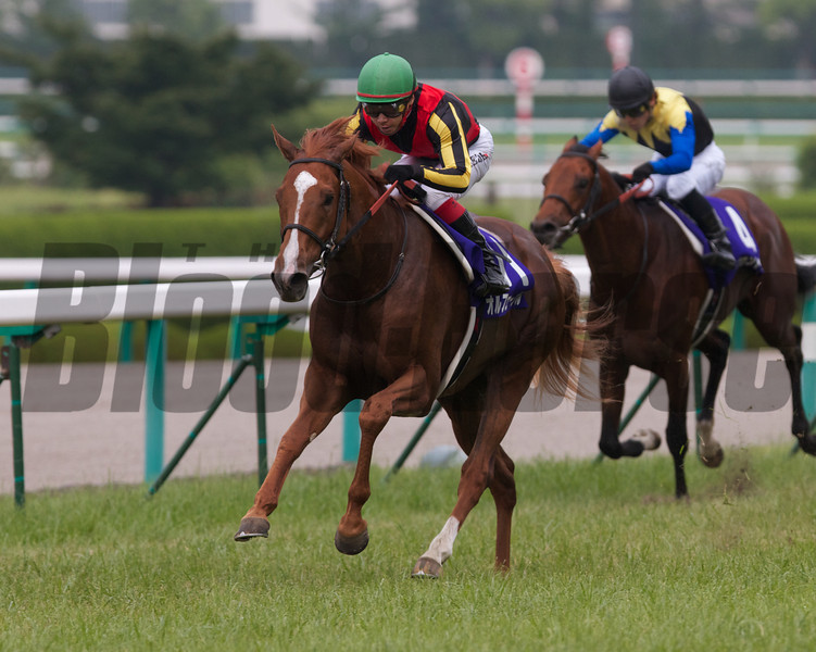 Orfevre wins the Takarazuka Kinen, a Breeders Cup Challenge race for the Breeders Cup Turf<br /> Photo by Kate Hunter