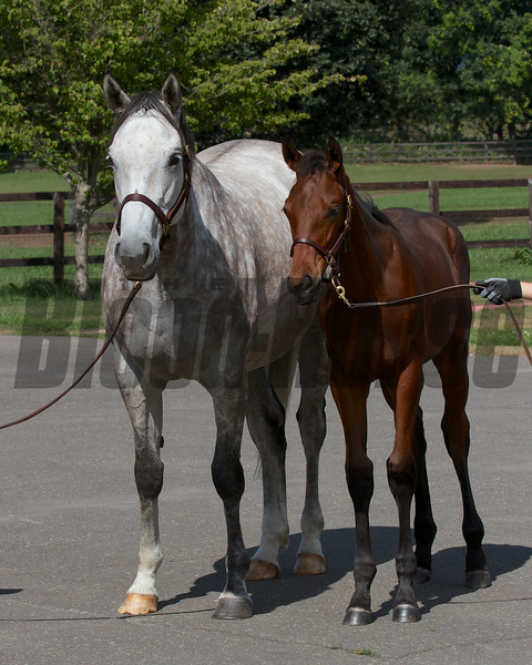 Laragh at Shadai Farm with her Deep Impact filly. Back in foal to Deep Impact.<br /> Photo by: Kate Hunter