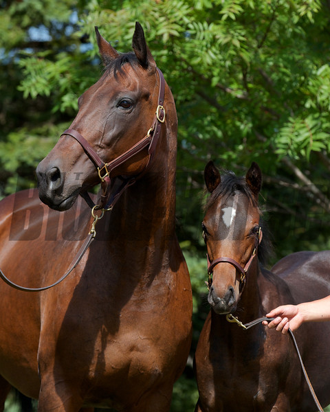 Moscow Burning in Japan with her 2012 Heart's Cry colt.<br /> Photo by: Kate Hunter