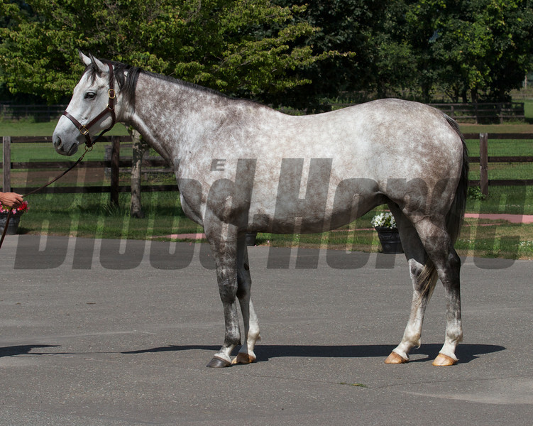 Laragh at Shadai Farm, had a Deep Impact filly. Back in foal to Deep Impact.<br /> Photo by: Kate Hunter
